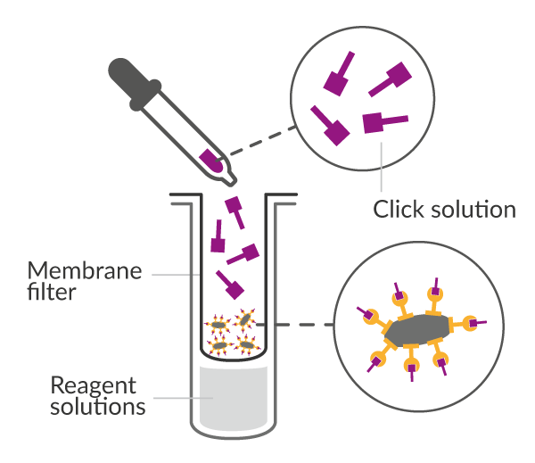 Click Chemistry reaction