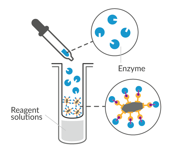 Enzyme addition